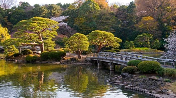 Shinjuku Gyoen (Japon) : jardin impérial de Shinjuku