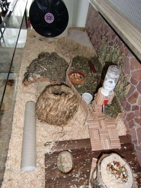 """Janosch - So sehe ich die Welt oder ... """"Oh, Wie schön ist mein Aquarium"""" - ARCHIV - Hamstergeschichten - www.das-hamsterforum.de"""