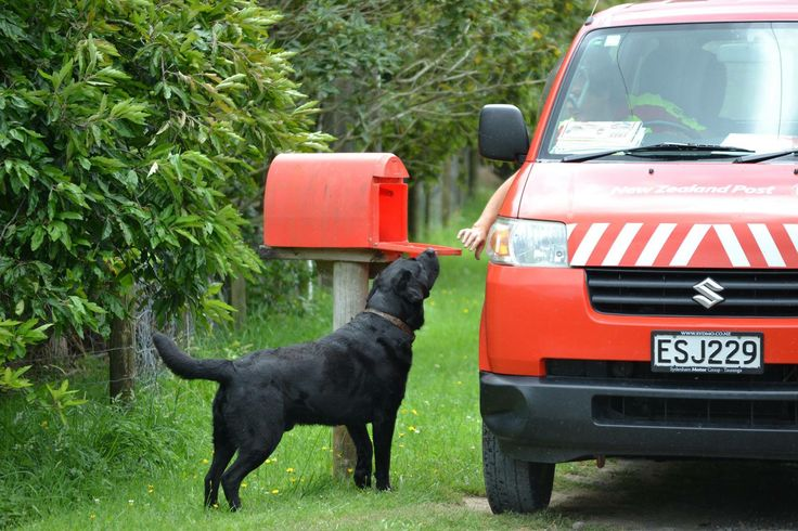 Postman Tonga