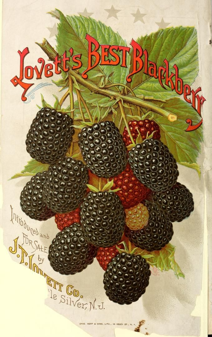 Lovett's guide to fruit culture : spring 1894