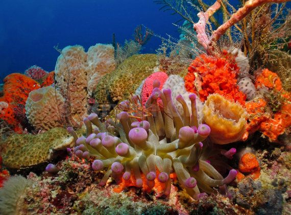 beautiful colorful coral reefs - photo #12