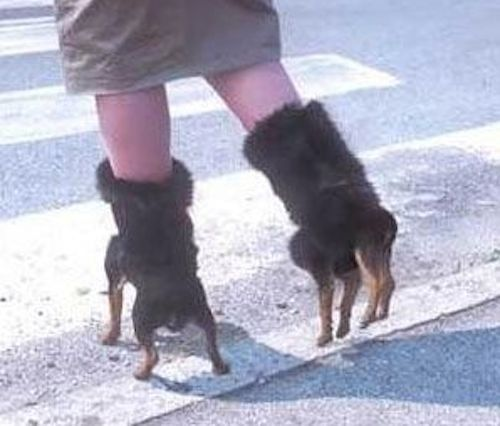 Four Legged Foot : 15 Bizarre-Looking Shoes Nobody Should Ever Wear | TOAT