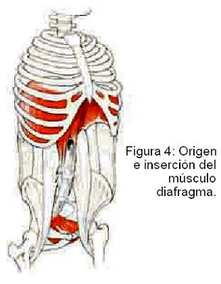 28 best Diafragma images on Pinterest | Pilates, Pilates workout and ...