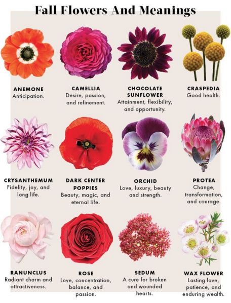 Fall Flowers and Their Meanings