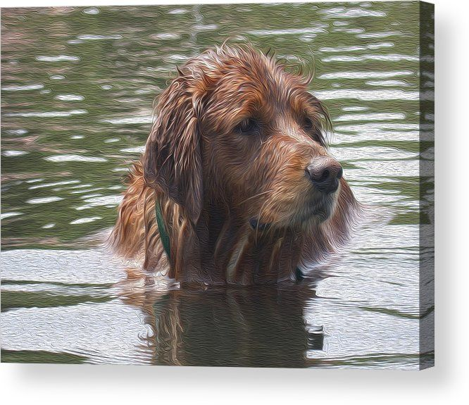 Dog Acrylic Print featuring the painting Dog Dip Oil Painting Version by Robert Gates