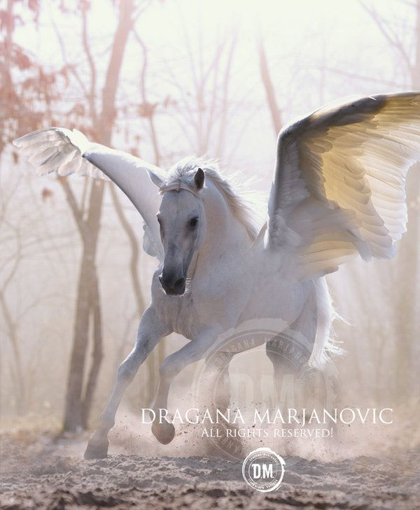 Pegasus by ~GRAPHICSOUL on deviantART if there are Pegasus, certainly there are Unicorns....