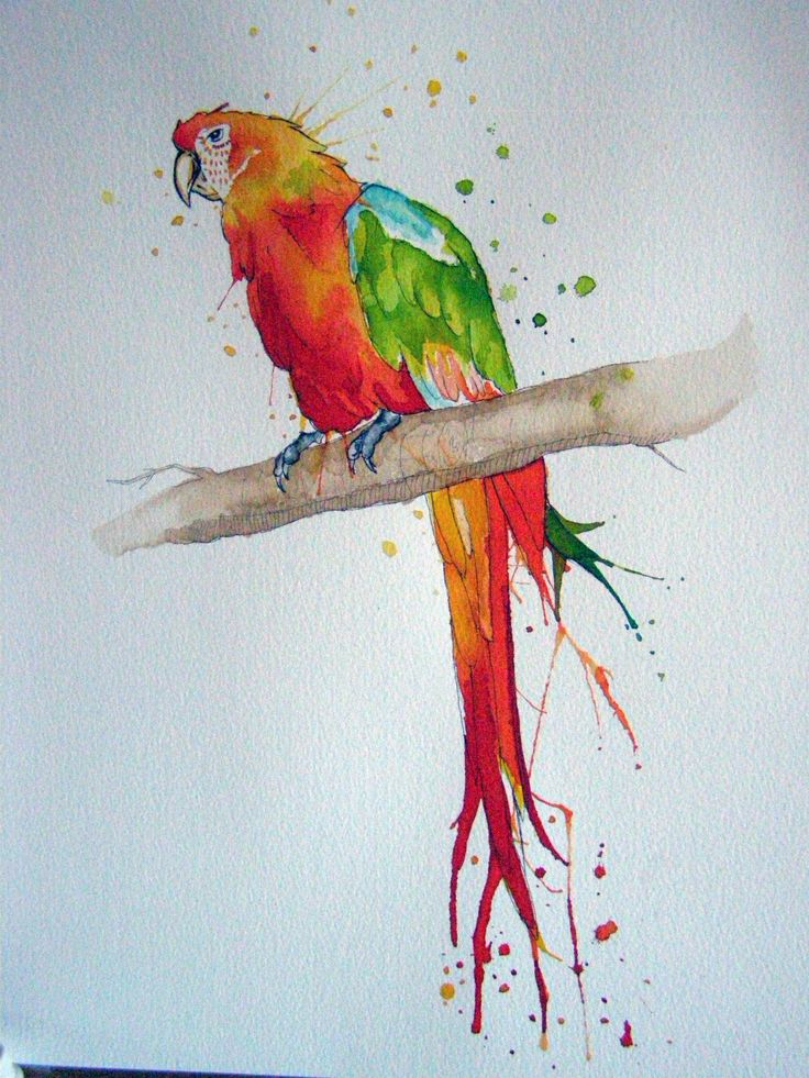 the painted bird essays Discuss the symbolism of term 'painted bird' who is a painted bird, and why does the meaning change throughout the book how does the painted bird illustrate the core message of the novel most of the painted bird is written in the first-person what is the effect of this point of view why did kosiński [.