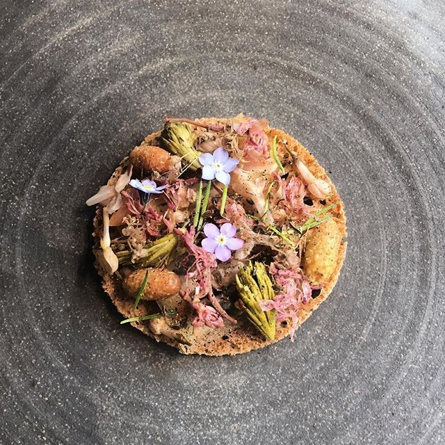 A crisp bread made from #swedishwheat from #ulande 90 year old clams and #pickledpinekernals and #forgetmenot flowers @restaurantkadeau #christianshavn #copenhagen #kadeau