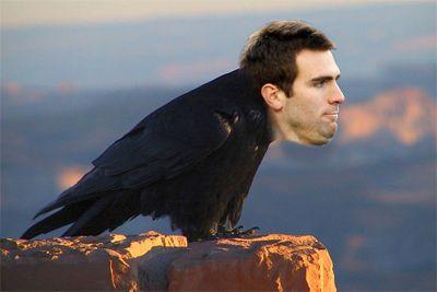 Ravens, i think