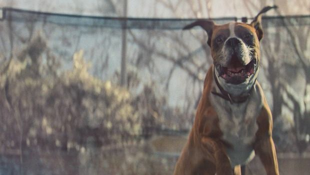 En lo más fffres.co: Un perro que salta en una cama elástica, protagonista del anuncio navideño de John Lewis #BusterTheBoxer:… #Spots