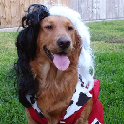 Homemade female dog costumes - photo#41