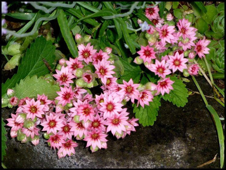 Kvetouci netřesk