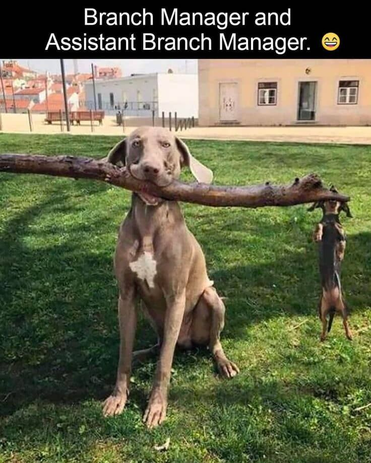 Image result for dogs branch manager and assistant branch manager