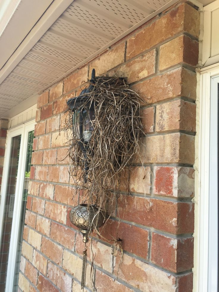 Birds nest on porch light porch lighting grapevine