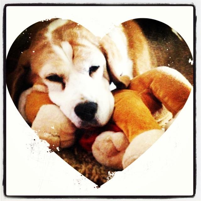 Tigga loves her teddy