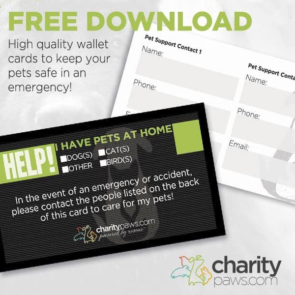 Free Design Downloads For Rescues Pet Emergency Pet Emergency Card Pet Boarding