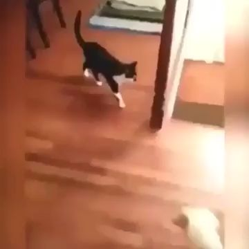 Knock the dog into another world