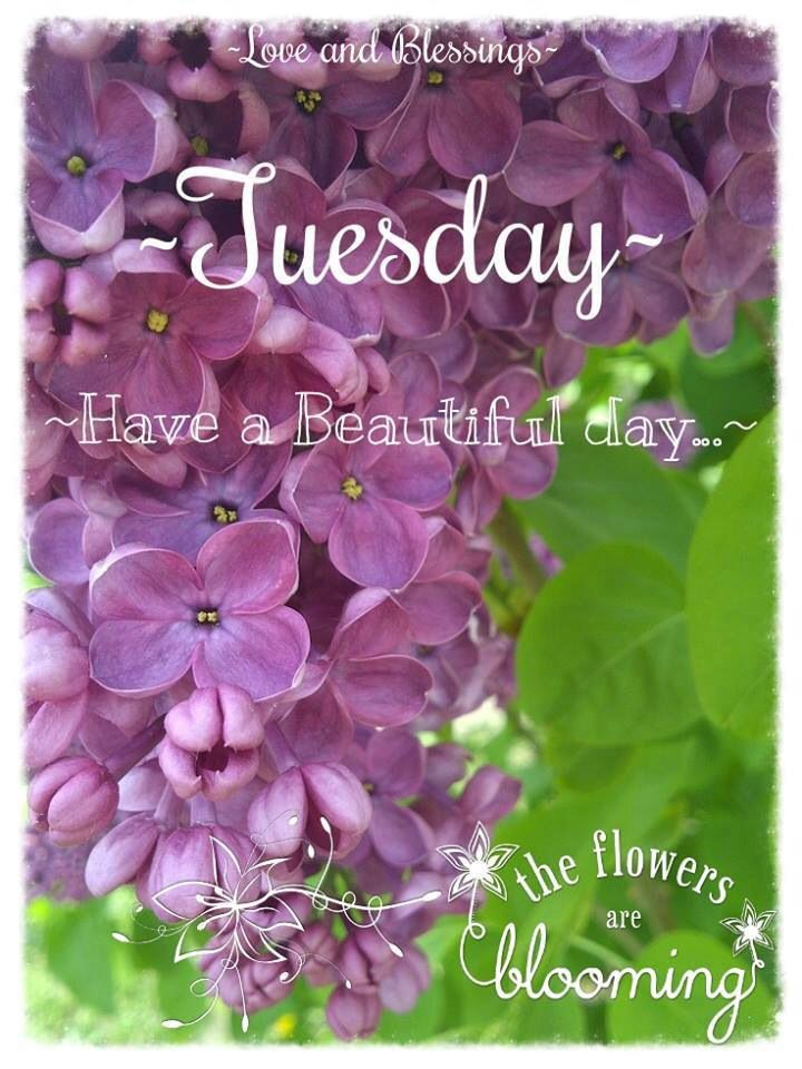 Have a beautiful Tuesday! ❤️