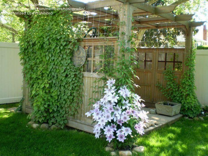 38 Glorious Japanese Garden Ideas: Pergola With Climbing Hydrangea!