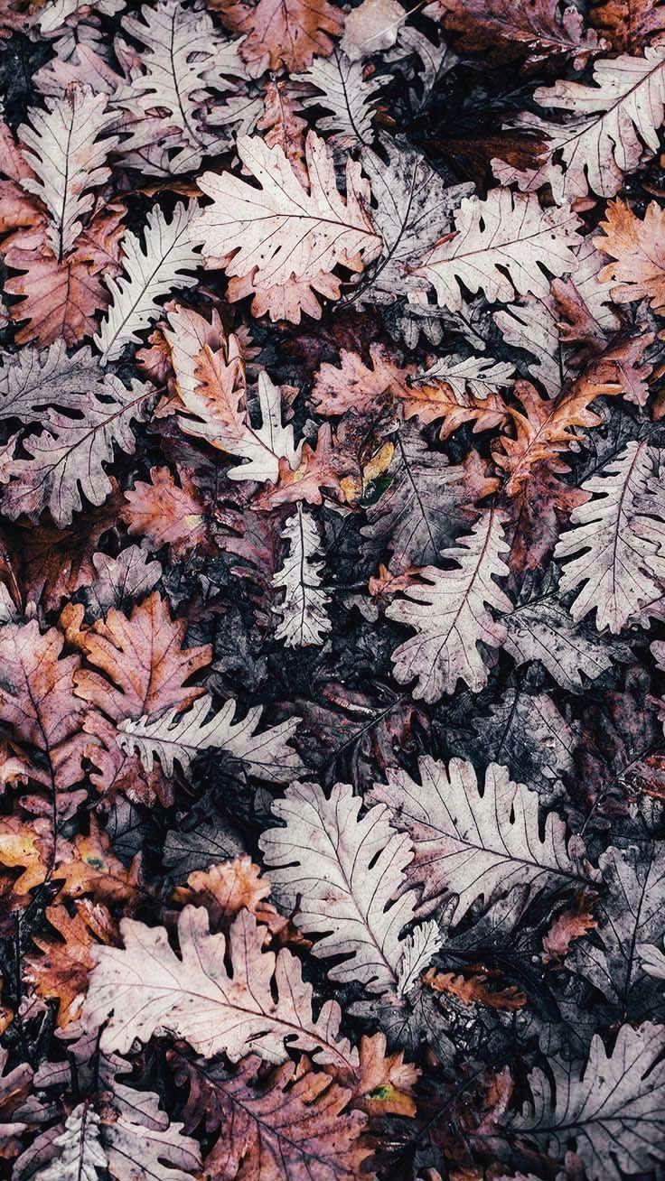 Happy Fall iPhone Wallpaper Sammlung von PreppyWal…