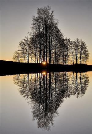 Reflection, Vestfold Fylke, Norway  photo via nowbook: Photos, Water Reflection, Winter Trees, Silhouette, Beautiful, Lakes, Pictures, Mirror Image, Photography