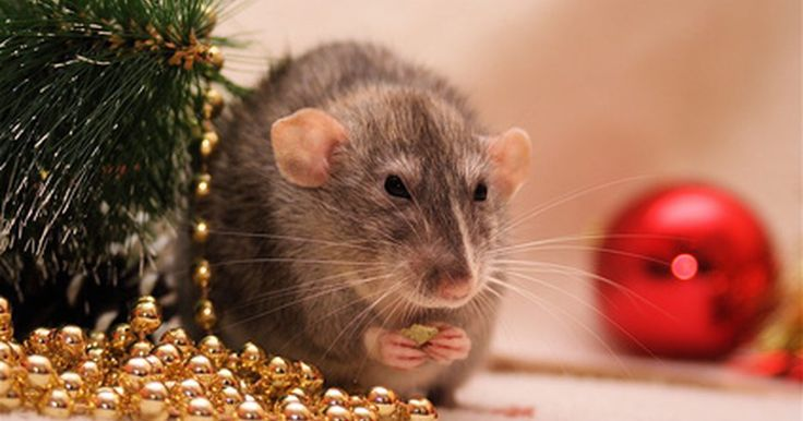 ¿Qué sustancias químicas tiene el veneno de rata?. El veneno para ratas por lo general contiene rodenticidas anticoagulantes, que causan una hemorragia interna. También pueden contener otros ingredientes tales como borato de sodio, colecalciferol, estricnina, fosfuro de zinc, bromelatina y el compuesto 1080. Todos son eficaces para deshacerse de las ratas. Cada tipo de veneno reacciona de una ...