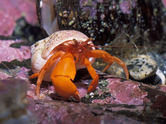 68 best images about Phyla Project on Pinterest | Lobsters ...