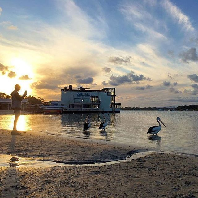 Watching the day come to a close from the Noosa River can only get better when joined by these spectacular locals!