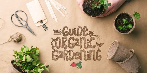 Any long-time organic gardener knows that organic gardening is not just a summer activity! There are many chores and tasks to stay on top of a healthy, organic garden all year round. One benefit of working on it during the colder months is that it ma...