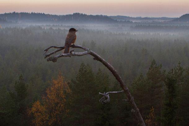 Luontokuvaajat vetoavat uhatun erämaan puolesta | Suomen Luonto