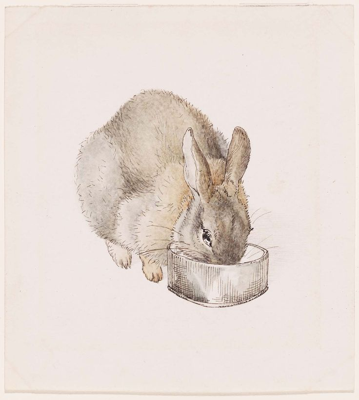 Rabbit eating from a bowl, 1890s Beatrix Potter (English, 1866–1943) Museum of Fine Arts Boston
