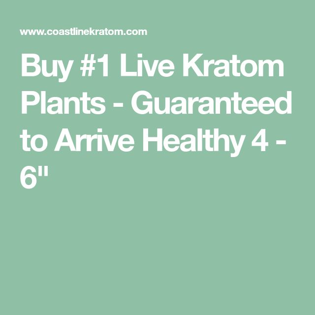 Buy #1 Live Kratom Plants - Guaranteed to Arrive Healthy 4 - 6""