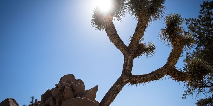 With three ecosystems, hundreds of unique desert plant species, several of fault lines, and magnificent geologic formations, Joshua Tree National Park is a truly fascinating place to visit that is worth as much time as you can give to it. And the park is incredibly accessible; nearly all of the