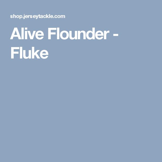 Alive Flounder - Fluke