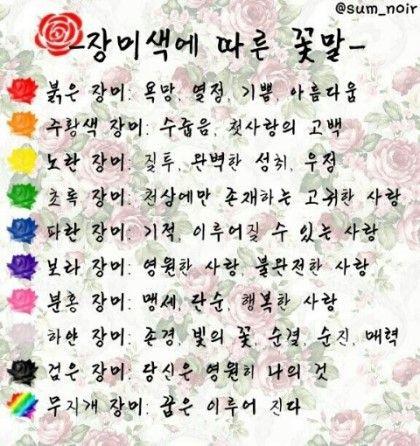장미 색깔별 꽃말