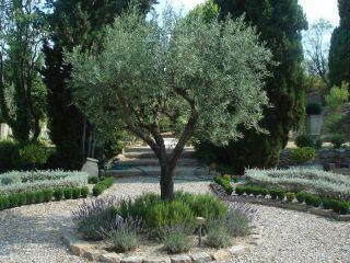 Mediterranean Garden Society.  Gardening in the Languedoc - France