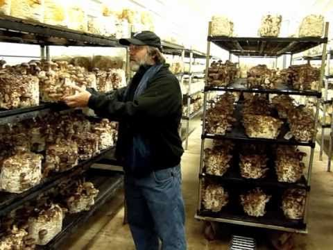 paul stamets growing gourmet and medicinal mushrooms pdf