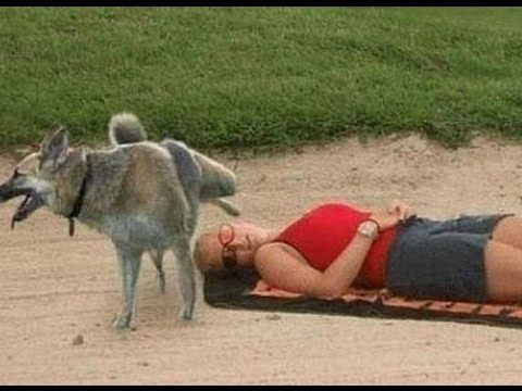 Funny Videos - Try Not To laugh - Top Funny Videos Compilation 2016 | LN...