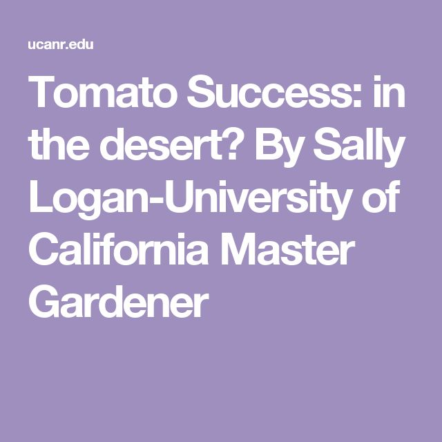 Tomato Success: in the desert? By Sally Logan-University of California Master Gardener