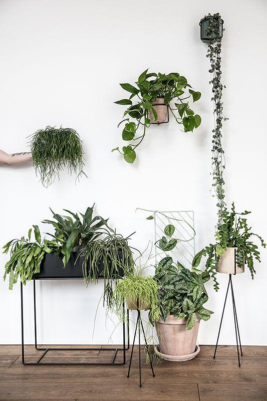 Greenify Image Inspiration 2017 Plante Tendenser Haengeplanter Plantbox Plants Pinterest