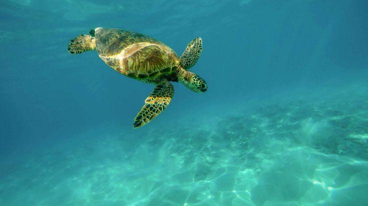 Utila is een klein tropisch eilandje gelegen aan de noordkust van Honduras in de…