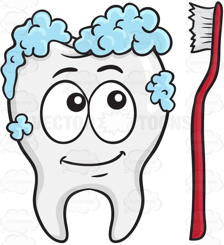 Tooth Being Cleaned By A Toothbrush #anatomicalstructure #bodilystructure #bodystructure #bone #bonestructure #brush #calcified #calcium #chew #chewdownfood #chewing #clean #cleaning #clinic #complexbodypart #dentist #dentures #enjoy #enjoying #fluoride #foam #foaming #happy #hardtissues #mouth #multipletissues #singletooth #smiling #teeth #tooth #toothwhitening #toothbrush #toothpaste #white #whitestructure #whitening #vector #clipart #stock