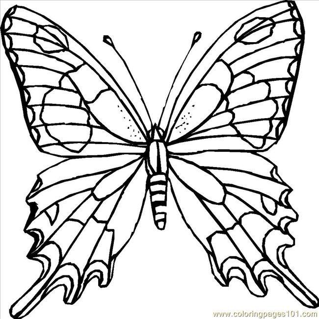 Butterfly Coloring Pages 249 Page For Kids And Adults From Insects