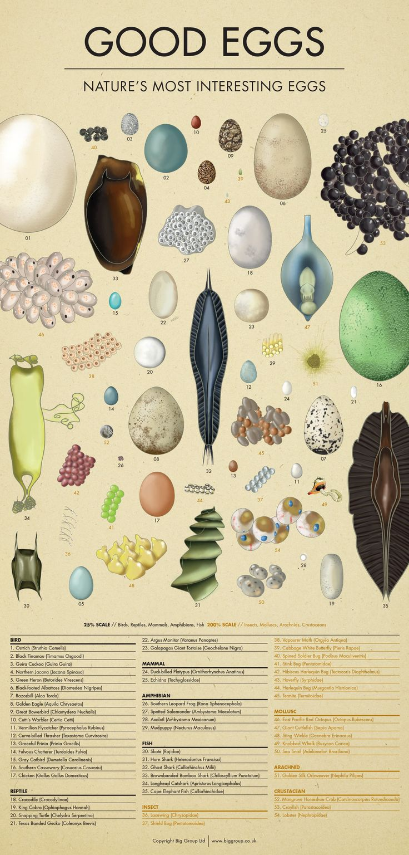 Good Eggs Infographic
