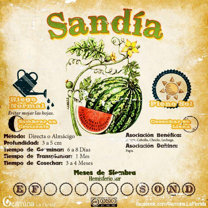 Sandia2.jpg (700×700)
