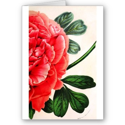 Botanical Print Card