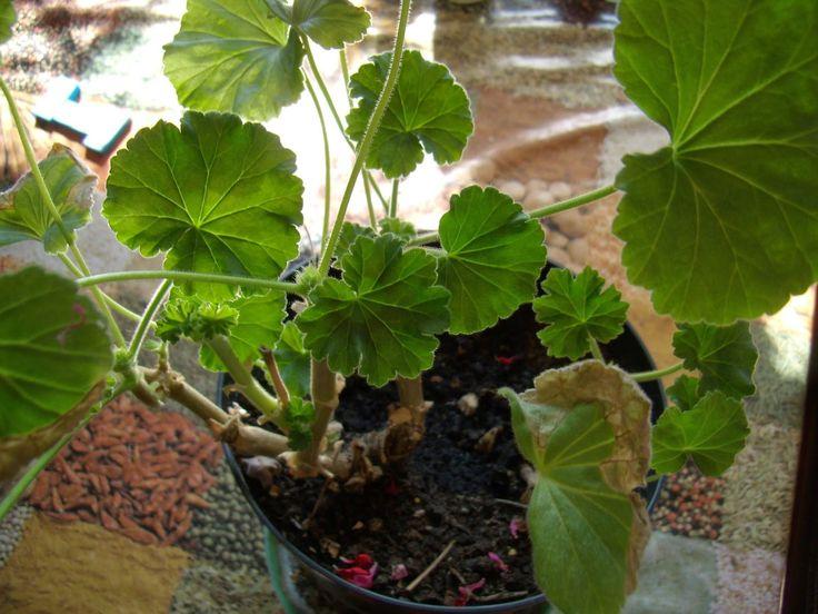 Przepis na kwiaty w ogrodzie | Łyżka i motyka