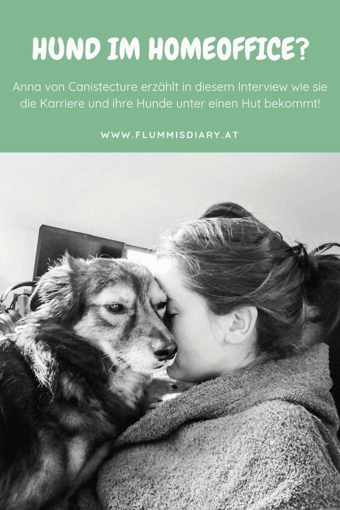 Home Office Mit Dem Hund Hunde Hundehaltung Hundetraining