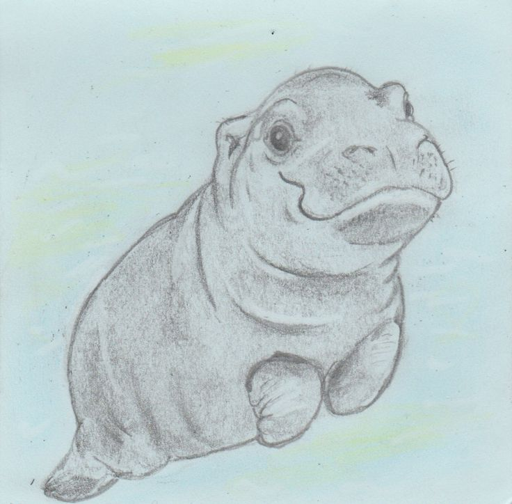San Diego Zoo baby hippo, quick drawing project, pencil on paper, Jenny Jump