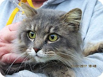 Maine coon pet md